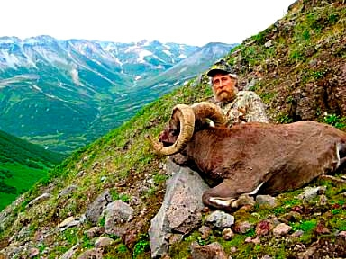 bighorn snow sheep hunt image