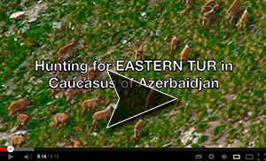 Australian Hunting Consultants Eastern Tur Hunt Video