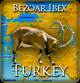 Bezoar Ibex Hunt Turkey