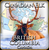 Canadian Elk Hunt British Columbia