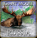 Giant Moose Hunt Russia