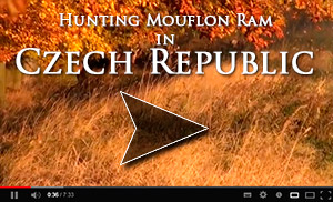 Mouflon Ram Hunt video