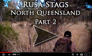 Rusa Stag Video 2